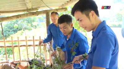 Lào Cai - Nhân rộng các mô hình kinh tế tiêu biểu của đoàn viên, thanh niên