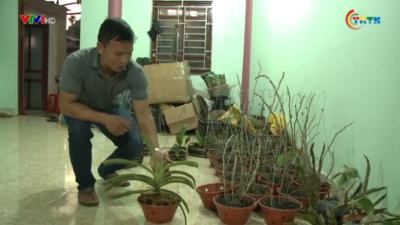 Phát triển cây phong lan mang lại thu nhập cao