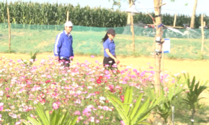 Quảng Nam - Khởi nghiệp với mô hình mới của thanh niên Điện Minh