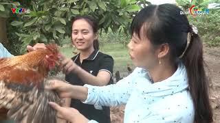 Chung tay cùng thanh niên nông thôn khởi nghiệp